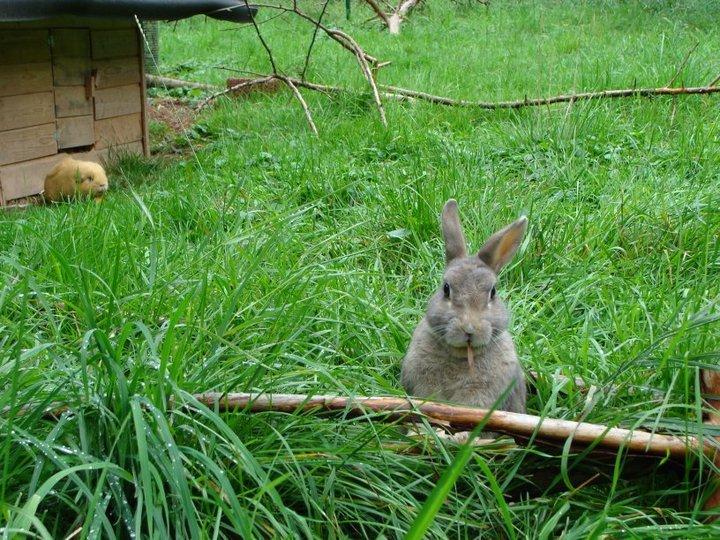 KaninchenimGruenen