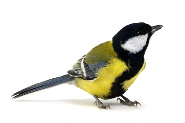 Biofit Wildvogelfutter 350g